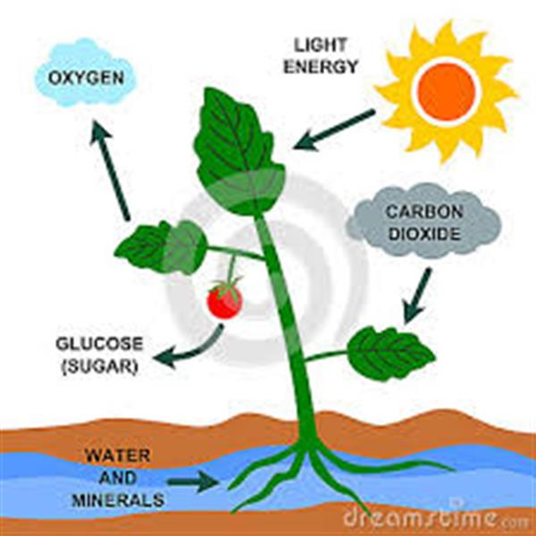 Boyer s photosynthesis vs respiration related files photosynthesis ccuart Images